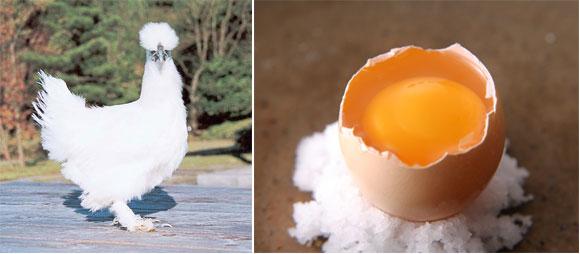 鳥骨鶏の卵